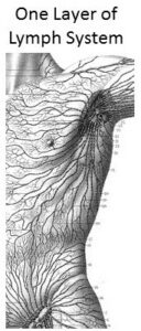 One Layer of Lymph System